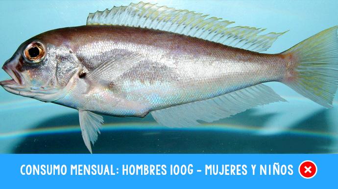 8 tipos de pescado que no deberias comer 07