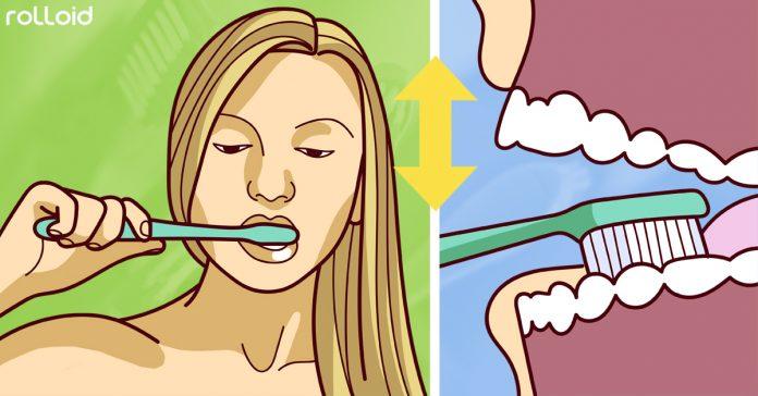 cuantas veces deberiamos cepilarnos dientes banner