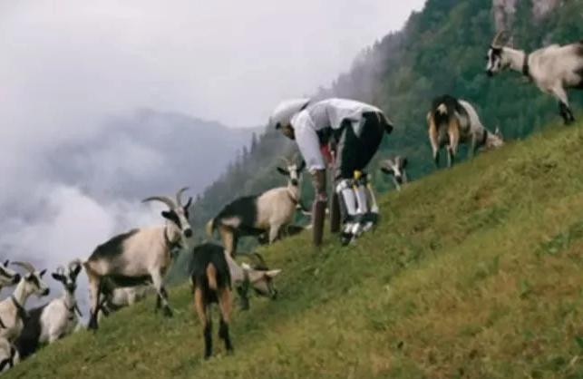 14 Historias surrealistas y reales de personas que intentaron convertirse en auténticos animales