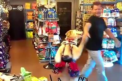 Se extiende por las redes el surrealista momento en el que un perro acabó bailando salsa con su dueño