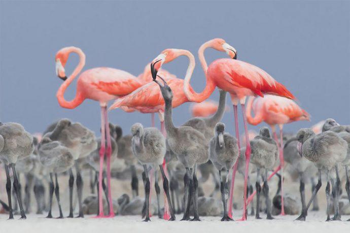 Las 20 Mejores fotografías del mundo ganadoras del BTO, el premio más prestigioso tan difícil de conseguir