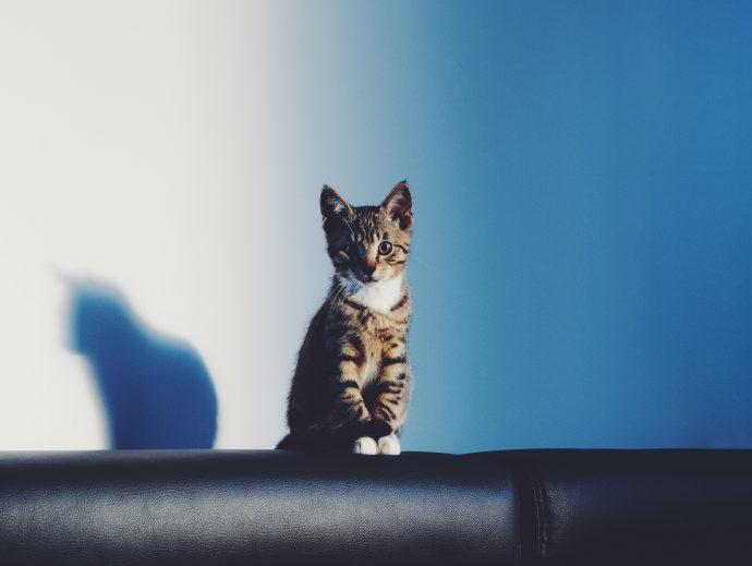 14 Mentiras de los gatos que nos hemos creído toda la vida