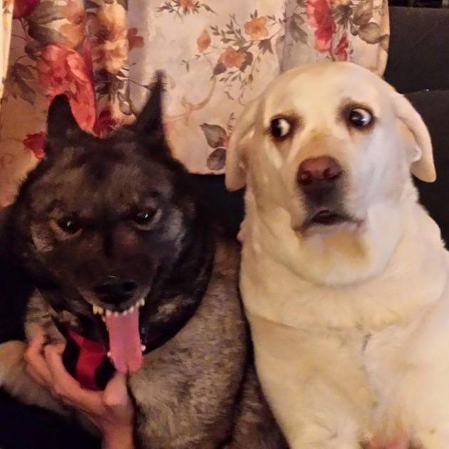 20 Divertidas Imágenes Perros tan torpes que te sacarán una sonrisa de oreja a oreja