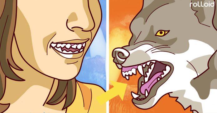 por que los animales tienen dentaduras perfectas y humanos no banner
