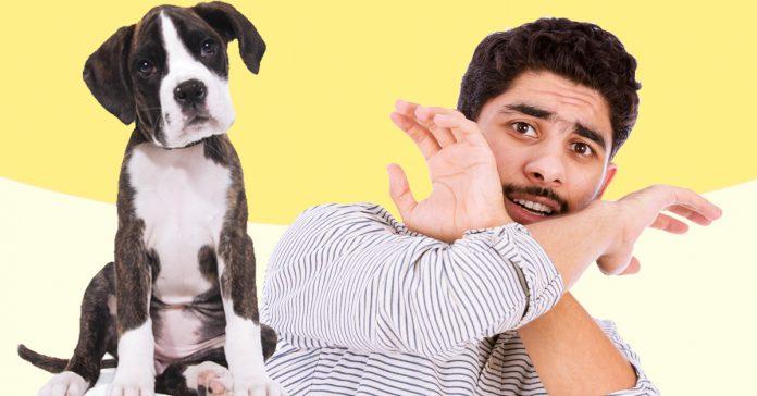 por que tienen tanto miedo los arabes de los perros banner