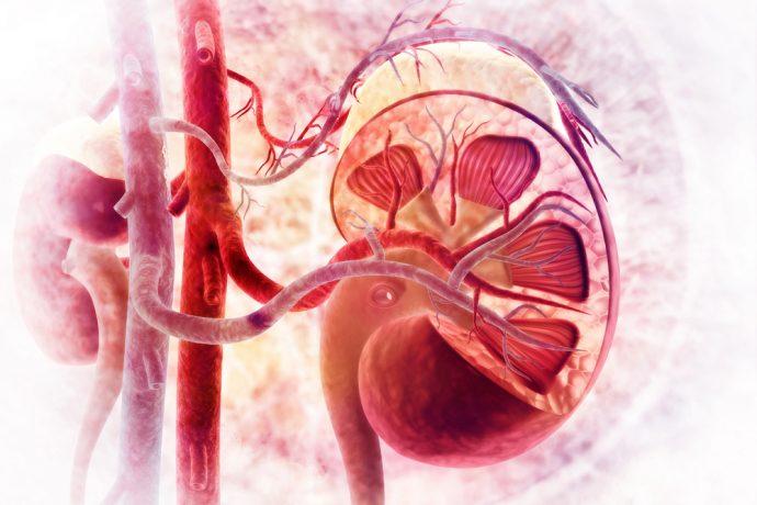 7 Cosas que hacemos mal todos los días y que están afectando seriamente a nuestros riñones