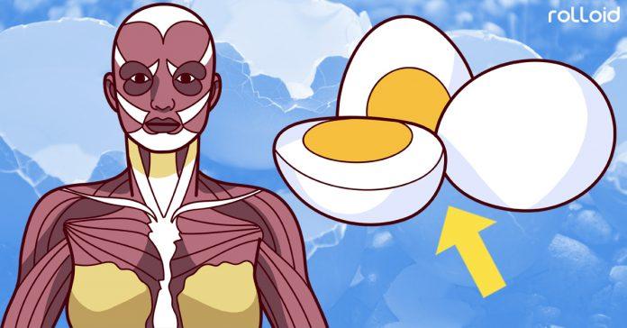 todo lo que le ocurre a tu cuerpo al comer dos huevos dia banner