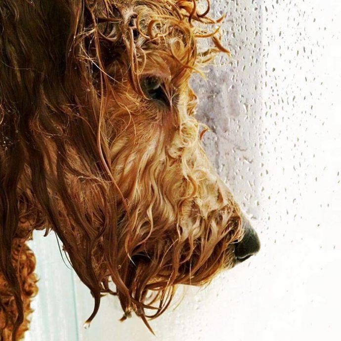 20 Divertidas Imágenes de Animales que podrían protagonizar la portada de cualquier álbum de música
