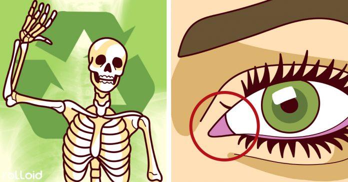 20 hechos sobre el cuerpo humano que te pondran la piel de gallina banner