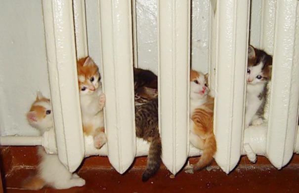 20 Divertidas Imágenes de animales que muestran que hacen todo lo posible para encontrar un rincón de calor