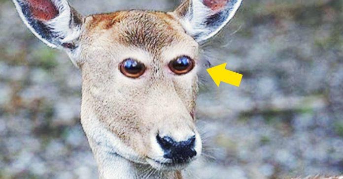 como serian animales ojos delante cara banner