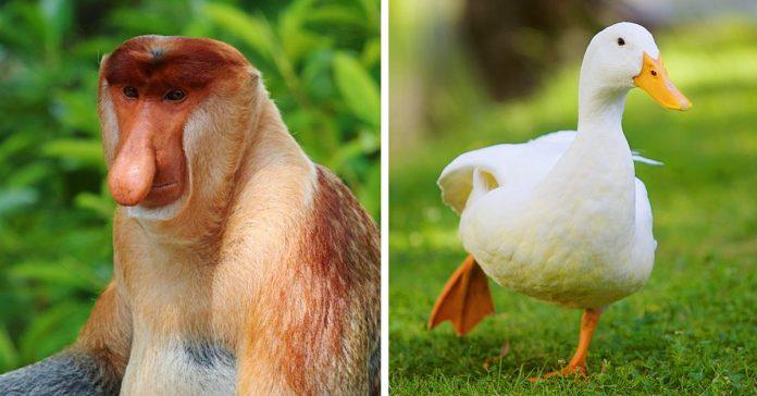 datos muy repugnantes sobre los animales que preferirias no saber banner