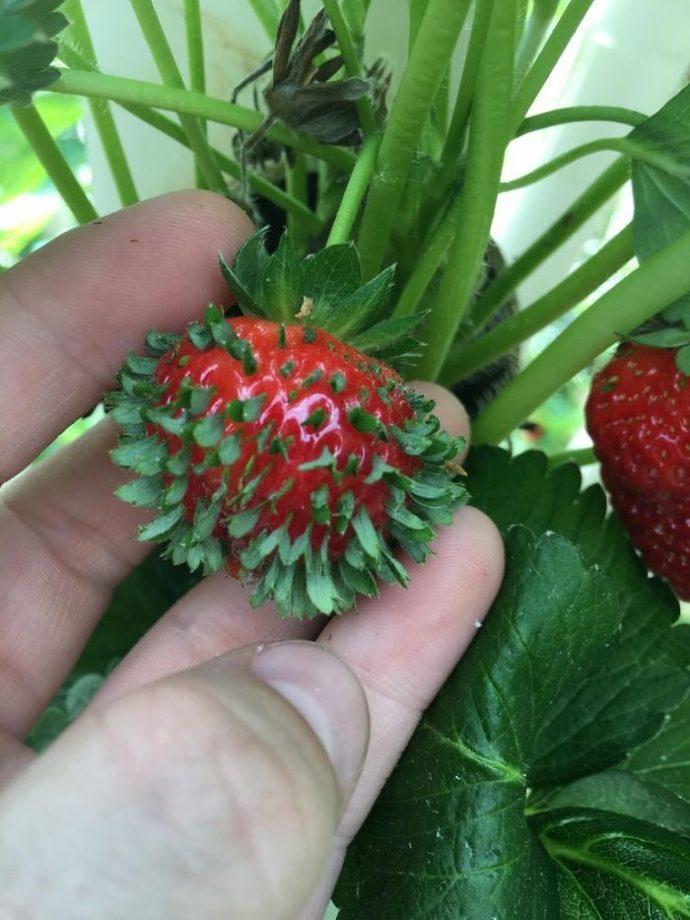 18 Frutas que empiezan a transformarse solas al dejarlas demasiado tiempo 'a sus anchas'