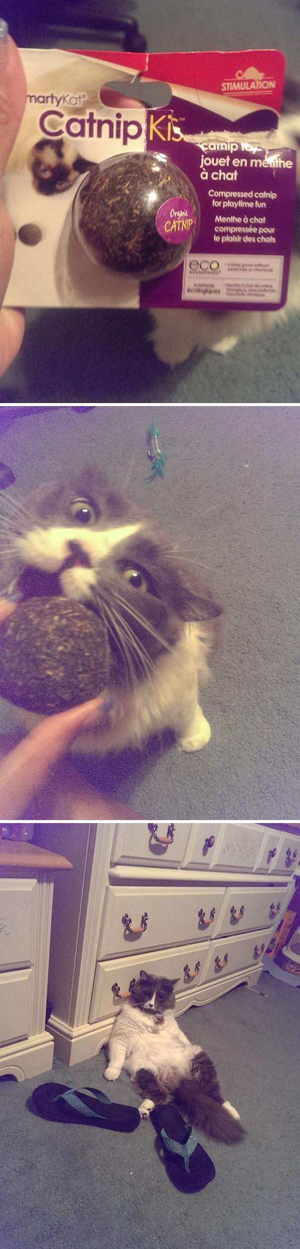 20 Divertidas fotos de Gatos que se drogaron de tal manera que no estaban dispuestos a que los moviesen