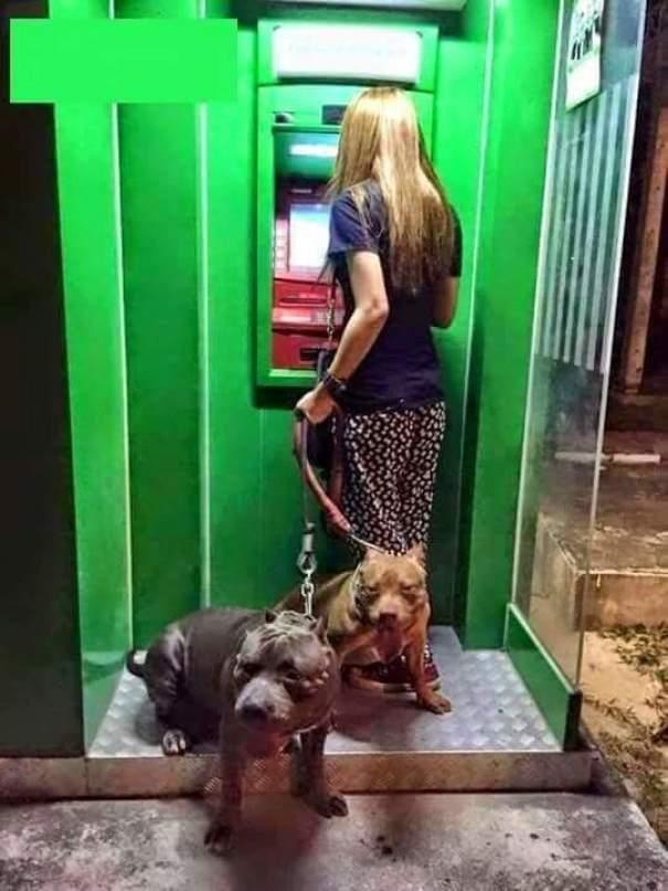 13 Imágenes que muestran que la mejor forma de defenderse en un cajero automático es un perro
