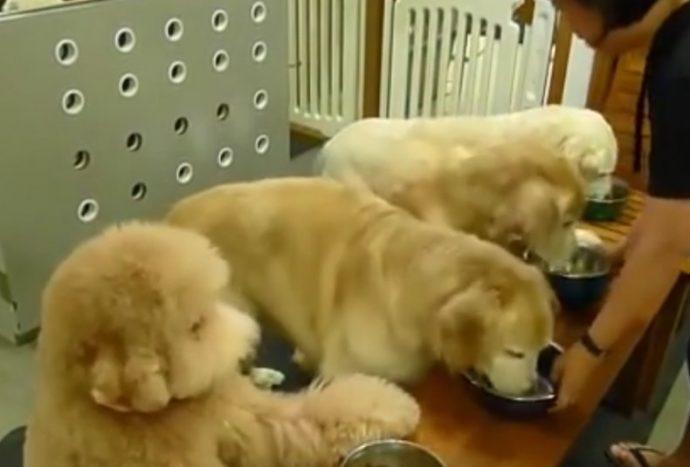 Se extiende por las redes el divertido vídeo de los 4 Perros que piden por favor que les pongan de comer
