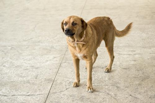 consejos utiles para que entiendas mejor a los perros 3