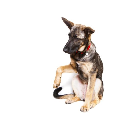 consejos utiles para que entiendas mejor a los perros 9