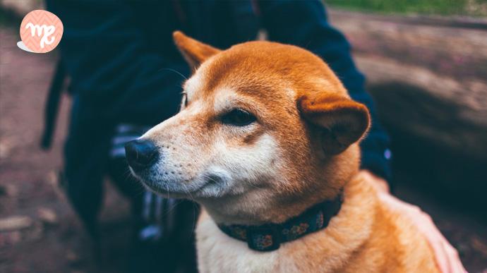 que tipo de perro eres segun tu signo del zodiaco 07