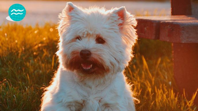 que tipo de perro eres segun tu signo del zodiaco 12