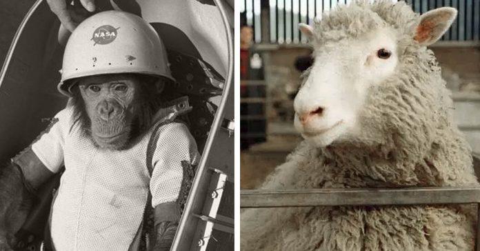 10 ocasiones en las que los animales cambiaron la historia de la humanidad banner