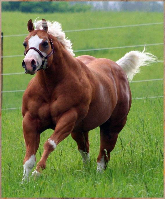 12 Imágenes de animales que parece que van todos los días al gimnasio