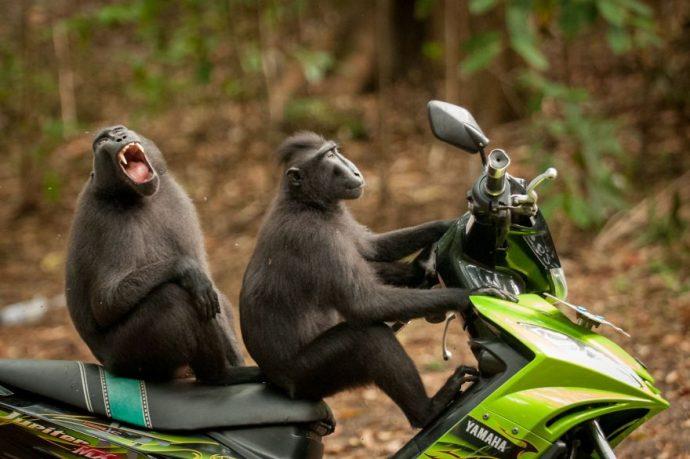 14 Fotografías inéditas de animales capturadas en el momento perfecto