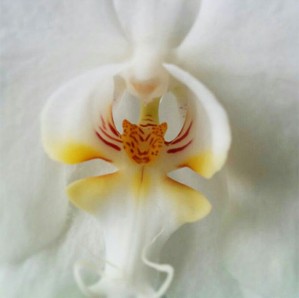 17 Divertidas imágenes de flores encontradas en el bosque que parecen otras cosas menos flores