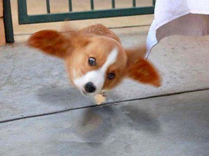 20 Divertidas imágenes de perros que arruinaron las fotos en el momento perfecto