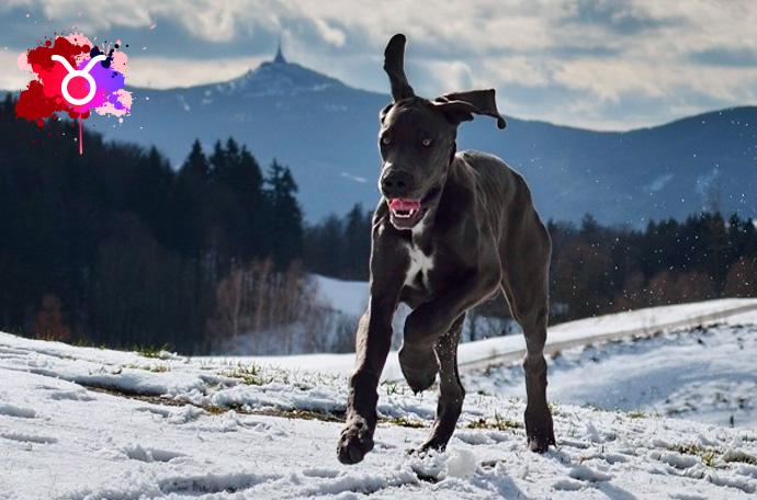 esta es la raza de perro perfecta para ti segun tu signo del zodiaco 02