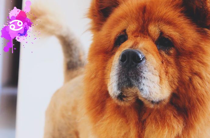 esta es la raza de perro perfecta para ti segun tu signo del zodiaco 05