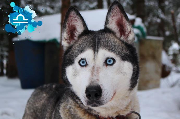 esta es la raza de perro perfecta para ti segun tu signo del zodiaco 08