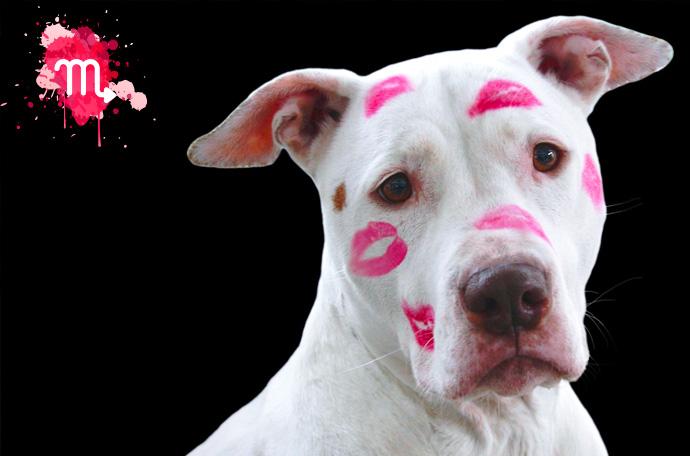 esta es la raza de perro perfecta para ti segun tu signo del zodiaco 09