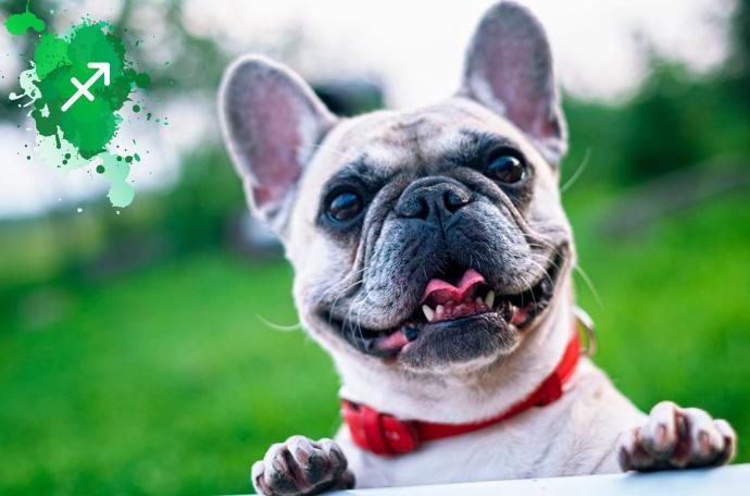 esta es la raza de perro perfecta para ti segun tu signo del zodiaco 10