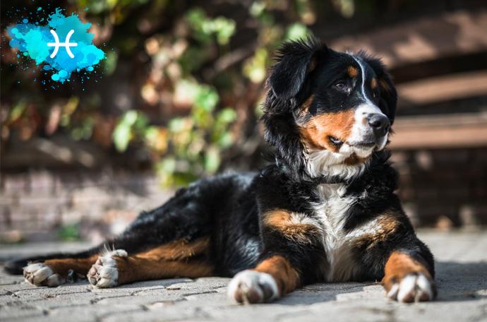 esta es la raza de perro perfecta para ti segun tu signo del zodiaco 13
