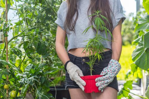 esto es lo que la marihuana realmente hace en tu cuerpo 194603