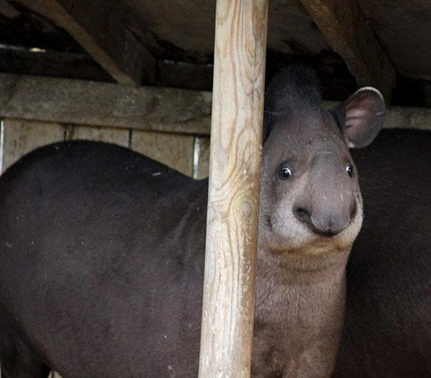 20 Divertidos animales nada fotogénicos que prueban que ellos también pueden salir mal en las fotos