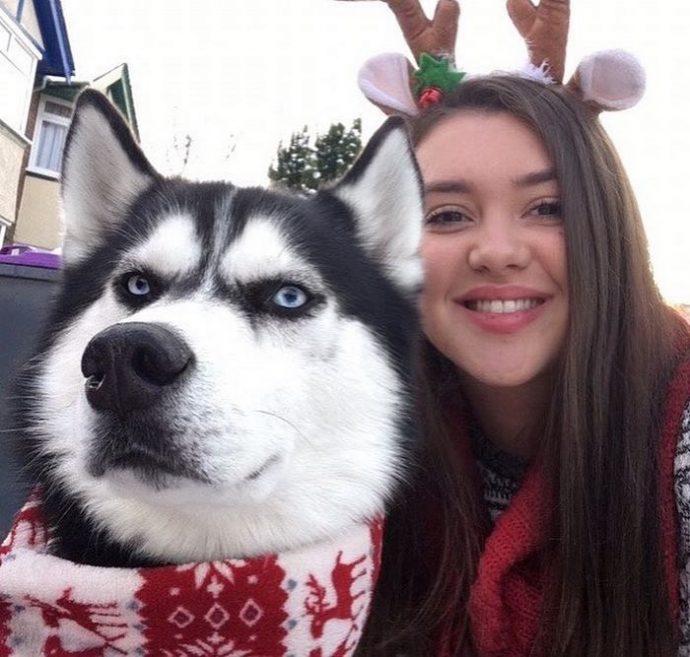 11 Divertidas Fotografías de una pareja que intentó hacerse una sesión de fotos navideñas con su Husky