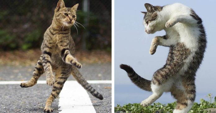 fotografo japones que capta gatos banner