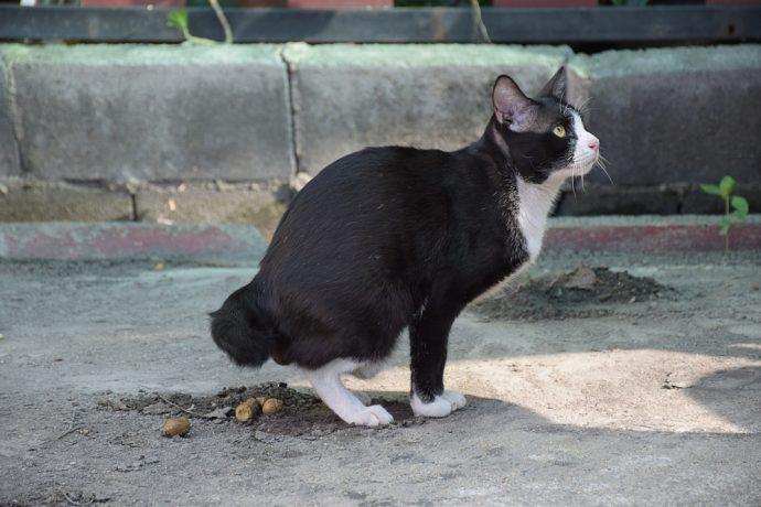 gato caca defecar