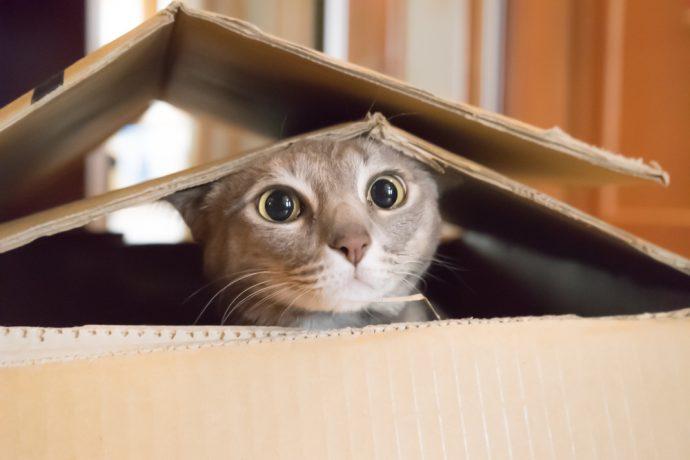 gato caja caca