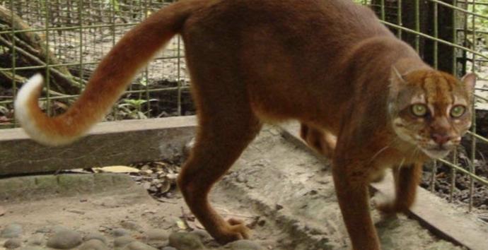 20 Extraños gatos y perros que no se ven en cualquier parte y que son difíciles de encontrar