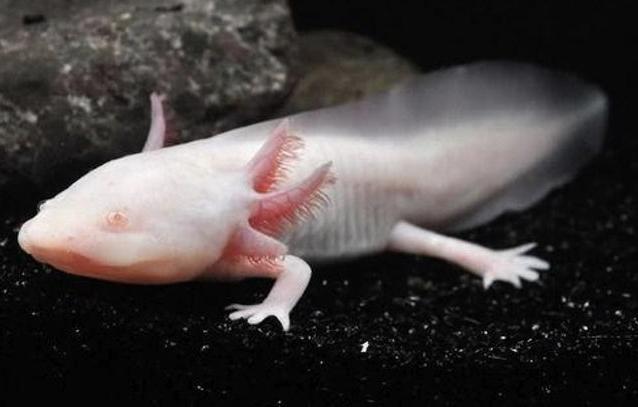 19 Extraños animales acuáticos con albinismo que seguramente no habías visto antes