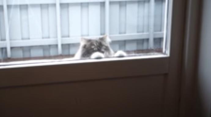Graban en vídeo el error que cometió un hombre al pensar que hacía bien al abrirle la puerta a su gato