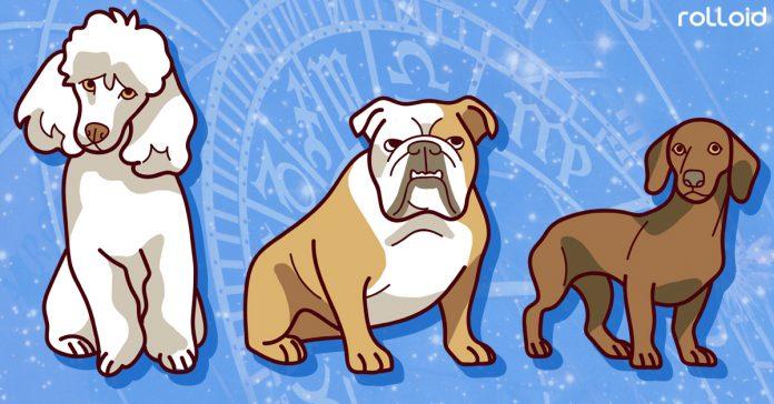 la raza de perro perfecta segun tu signo zodiaco banner