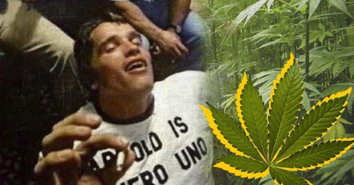 los beneficios de entrenar y tomar marihuana banner