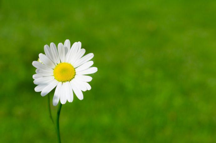 5 Cosas que le ocurren al cuerpo cada vez que tomamos manzanilla