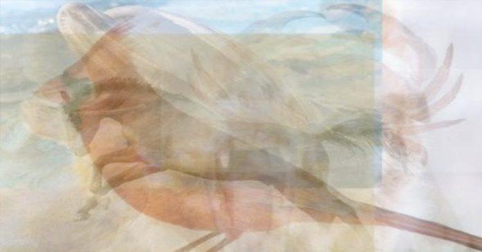 ver un pato en esta imagen revela algo muy profundo de tu personalidad banner