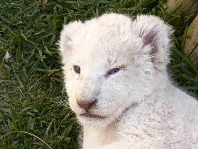 10 Animales con albinismo que decidieron desafiar las leyes de la naturaleza