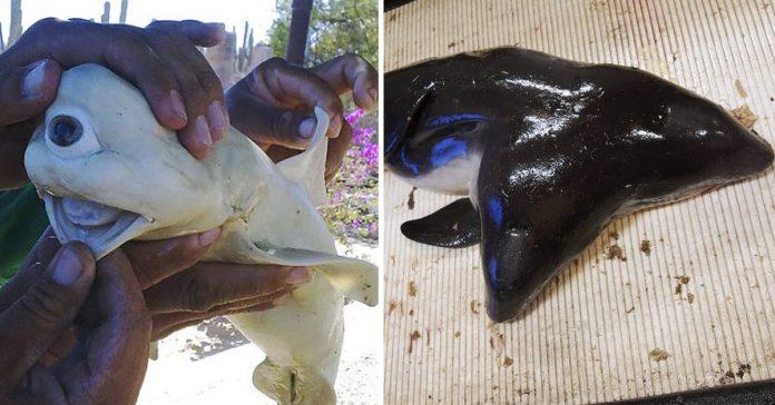 15 extranas criaturas que los pescadoras han encontrado en alta mar banner